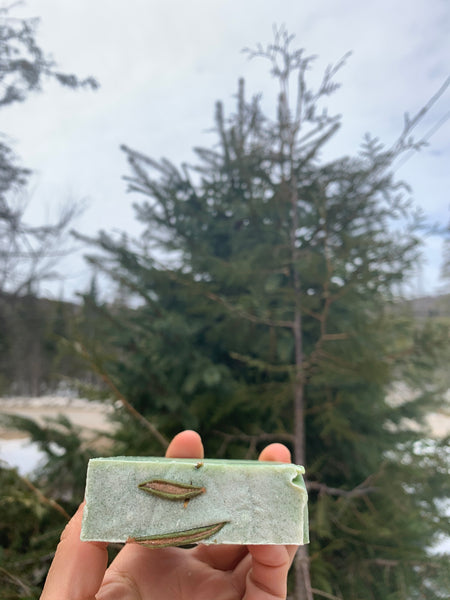 Labrador Tea & Nettle Shampoo Bar