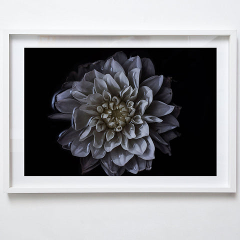 Chrysanthemum, 2017. Tamika Keioskie