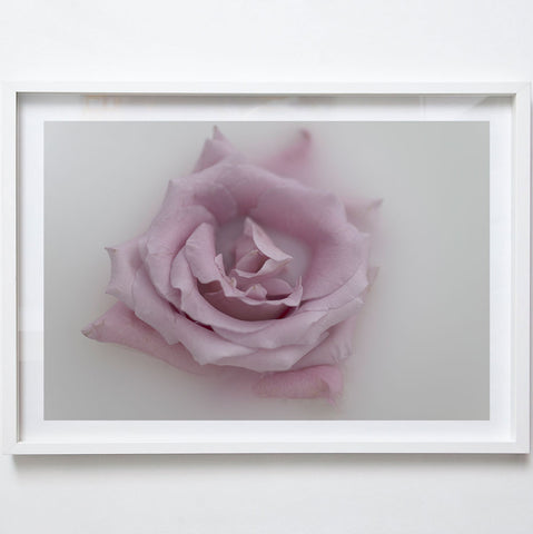 Pink Rose, 2017. Tamika Keioskie