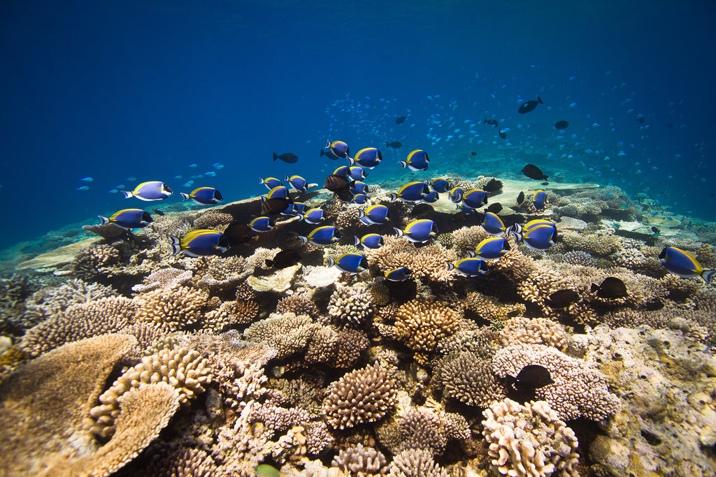 You can still find healthy coral reefs away from resorts and local islands