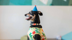 Must-Have Tips For Planning A Pawty