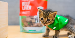The Essentials for First Time Cat Owners