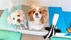 3 Benefits of Small Dog Daycare