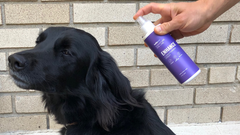 Tips For Grooming Your Pup At Home