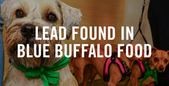 Lead Found in Blue Buffalo Food