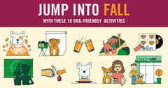 10 Things To Do With Your Pup This Fall