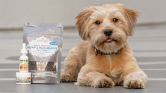 Benefits Of Hemp And CBD For Your Pet