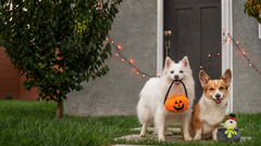 5 Costumes for Dogs This Halloween