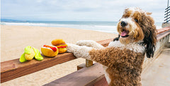 Summer BBQ Tips For Pet Parents