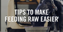 Tips to Make Feeding Raw Food Easier