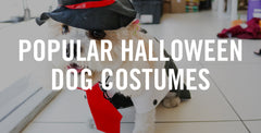 Popular Halloween Dog Costumes