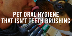 Pet Oral Hygiene That Isn't Teeth Brushing