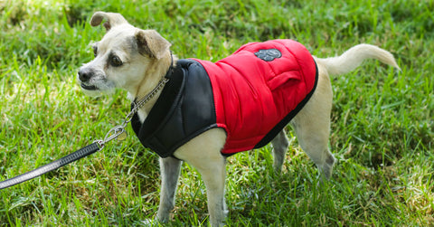 Canada-Pooch-Summit-Stretch-Vest