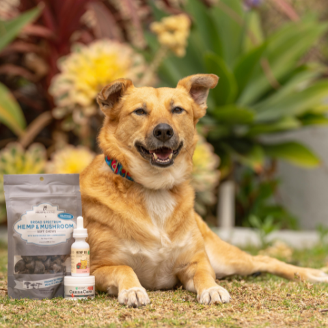 Large dog smiling next to pet-friendly CBD and hemp products.