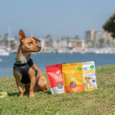 Dog posing with assortment of MIND BODY BOWL treats.