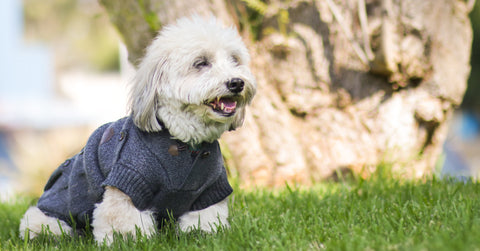 Canada-Pooch-Cargo-Cardigan-Fall-Fashion-Preview-Healthy-Spot-Los-Angeles-Orange-County