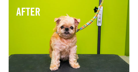 Great-Dog-Groomers-LA