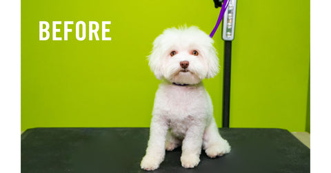 Dog-Groomers-Los-Angeles