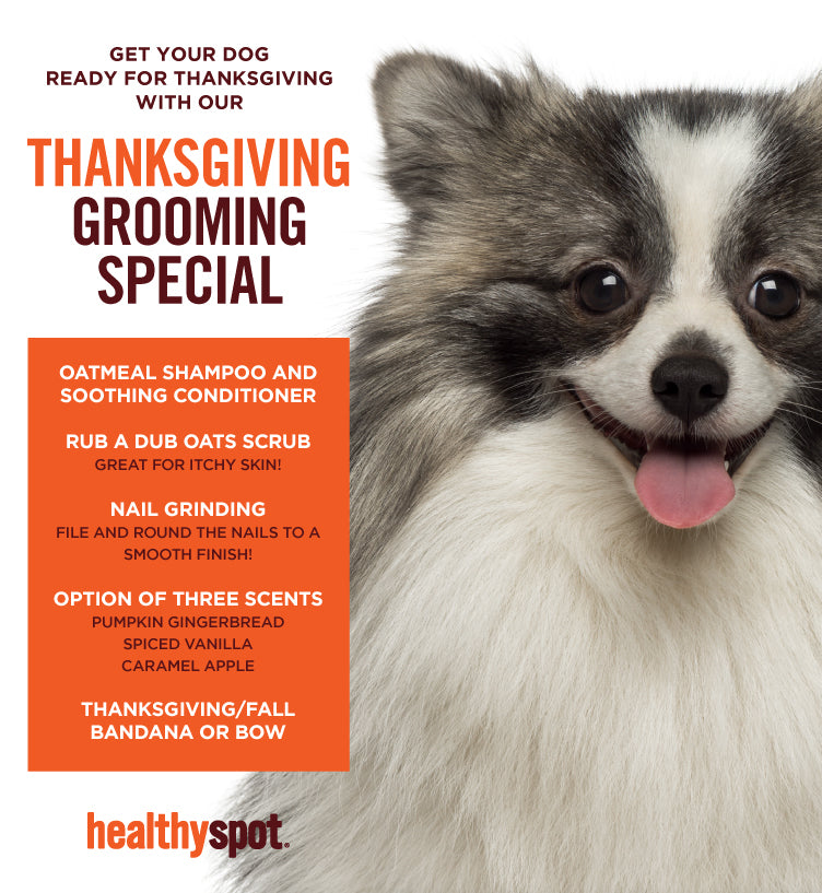 Thanksgiving Grooming Special