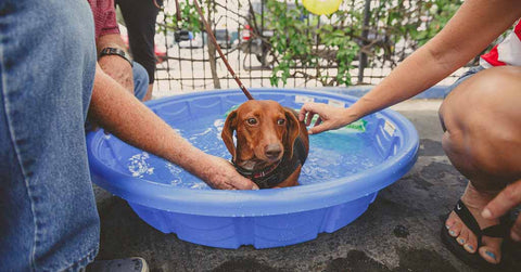 How To Teach Your Dog To Swim | Healthy Spot