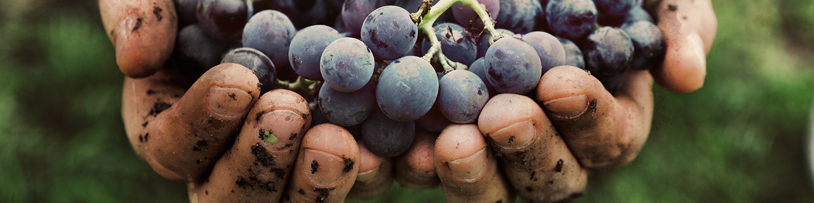 Organic vs. Biodynamic: what you need to know