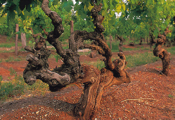 Wines for yachts old vines in Australia