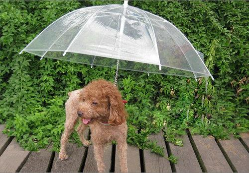 10PCS/LOT Wholesale Pet Products Supplies Walking In Rain Keeps Your Pet Dry Dog Umbrella Comfortable Useful Hot Sale