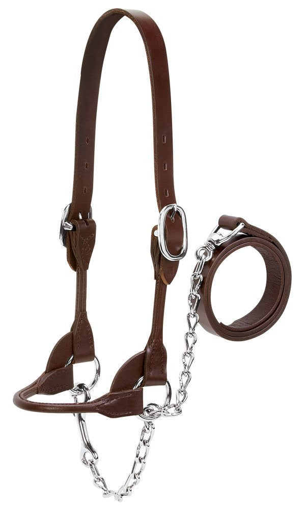 Weaver Leather Dairy/Beef Rounded Show Halter Bovine