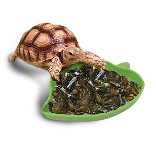 OSHIDE Reptile Feeder Dish Food Water Bowl Feeding Bowl for Centipedes Snakes lizards or Other Small Reptiles