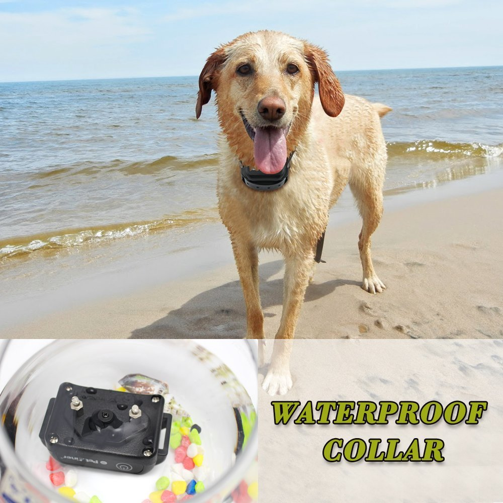 Petrainer 998DBB-1 Dog Training Collar Domestic Delivery Anti Bark Collar Dog Agility 300M waterproof and rechargeable