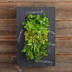 vertical wall herbs