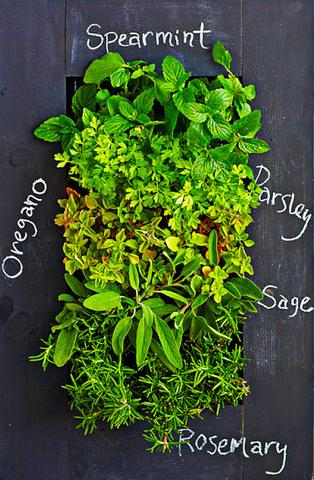 Herbs wall planter