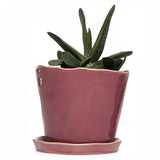 "Big Tika 5"" Ceramic Succulent Pot -  - 1"