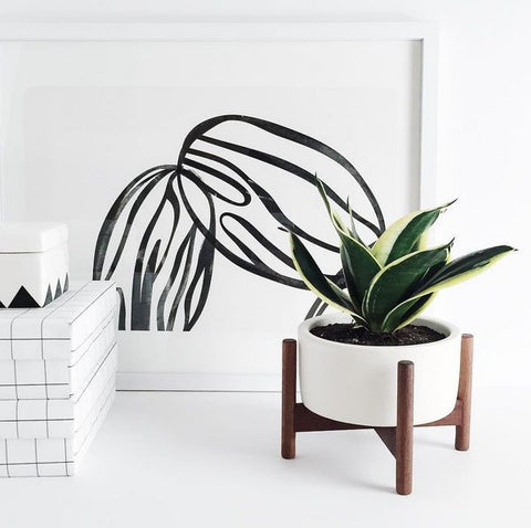 got comments bad knock planter not modernica r this off just target at knockoff malelivingspace