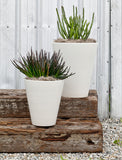 Modernica Case Study® Ceramic Funnel Pot Planter with Wood Stand -  - 6