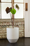 Modernica Case Study® Ceramic Hex Pot Planter with Wood Stand -  - 5