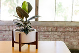 Modernica Case Study® Ceramic Desk Top Cylinder Pot Planter -  - 5