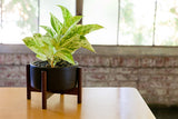Modernica Case Study® Ceramic Desk Top Cylinder Pot Planter -  - 4