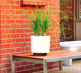 Modernica Case Study® Stoneware Ceramic Cylinder Planter with Plinth - gardenmybalcony.com - 2