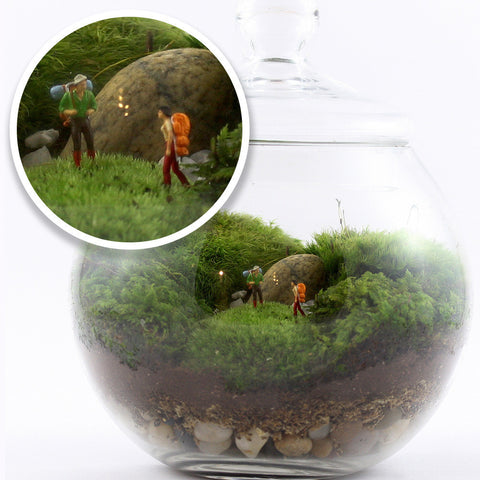Twig Uncharted Territory Readymade Terrarium -  - 1