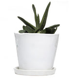 "Big Tika 5"" Ceramic Succulent Pot -  - 2"