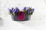 Elho Birdgarden Wall Planter - gardenmybalcony.com - 2