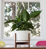 Modernica Case Study® Ceramic Raised Table Top Cylinder Pot Planter