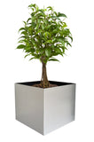 NMN Designs Madeira Aluminum Cube Planter Large - Without Wood Base - gardenmybalcony.com - 2