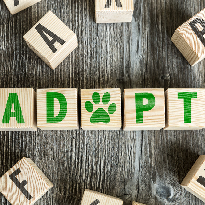 Pet Adoption, How Pets Can Improve Your Overall Health, 6 Ways Petc Can Improve Your Health, Health and Pets, How Adopting a Pet Can Add To Your Life