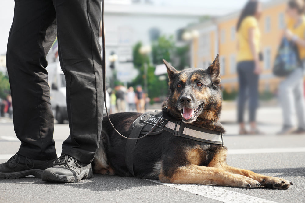 Drug & Alcohol Facts Week: How Naloxone Kits Can Treat Overdoses in K9 Police Dogs