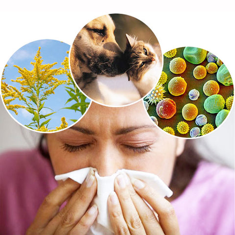 Allergies Shop For Products That Relieve Seasonal