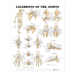 Buy Anatomy Poster Wall Charts by Anatomical Chart Company | Home Medical Supplies Online
