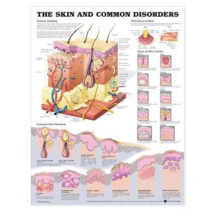Common Skin Disorders Anatomy Poster 20 x 26