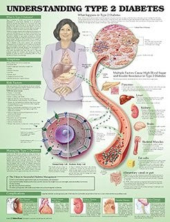 Buy Understanding Type 2 Diabetes Poster 20 x 26 online used to treat Diabetes Supplies - Medical Conditions